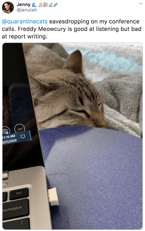 Cat - Jenny C AES/ @jenutah @quarantinecats eavesdropping on my conference calls. Freddy Meowcury is good at listening but bad at report writing. 11:16 AM B/25/2020 Del Backspace