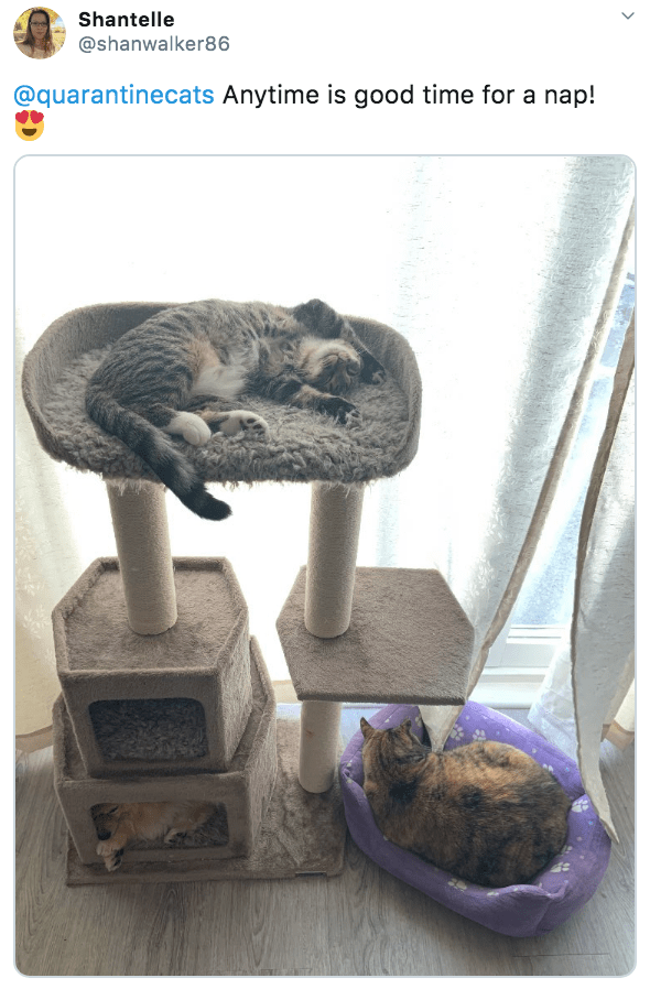 Rock - Shantelle @shanwalker86 @quarantinecats Anytime is good time for a nap! >