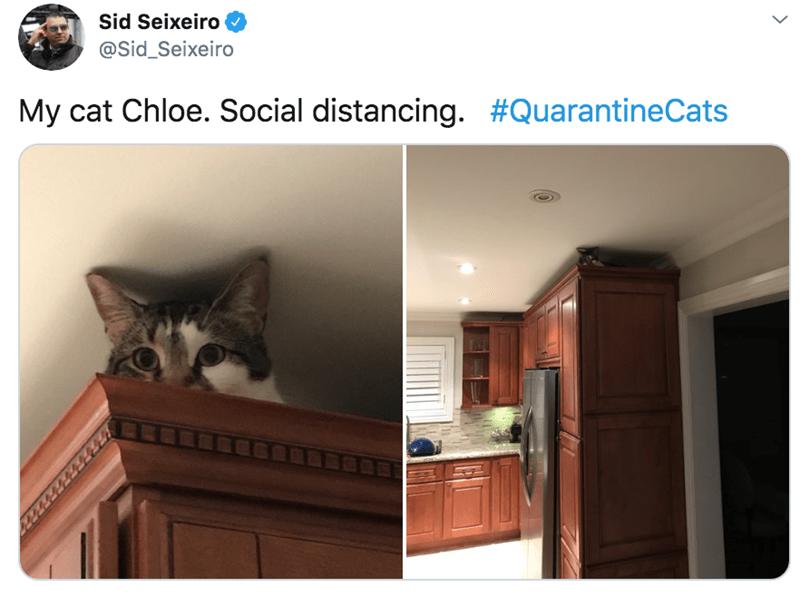 Cat - Sid Seixeiro @Sid_Seixeiro My cat Chloe. Social distancing. #QuarantineCats
