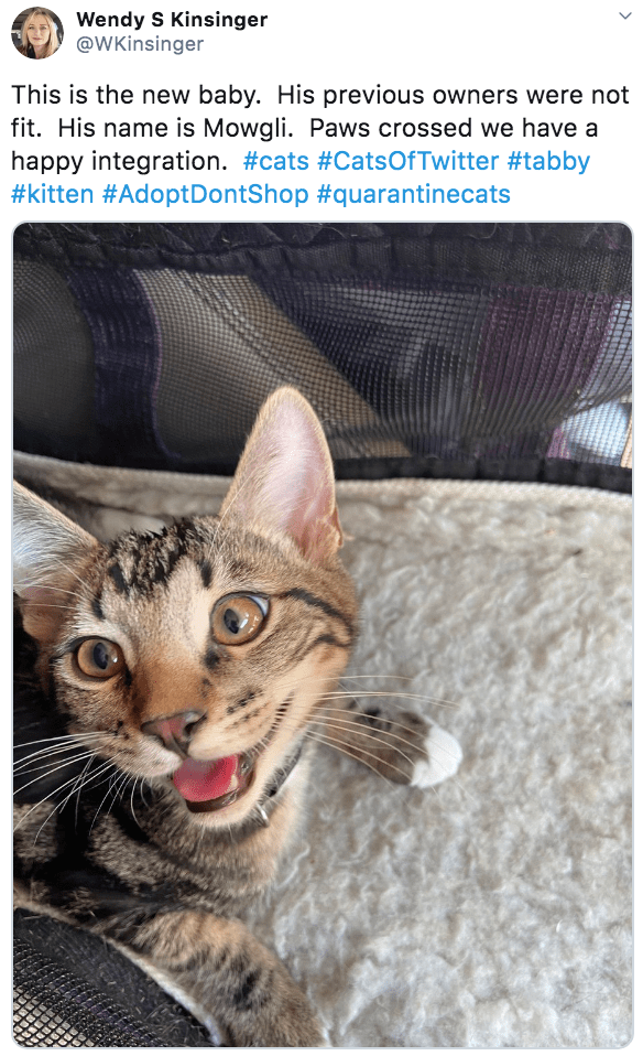 Cat - Wendy S Kinsinger @WKinsinger This is the new baby. His previous owners were not fit. His name is Mowgli. Paws crossed we have a happy integration. #cats #CatsOfTwitter #tabby #kitten #AdoptDontShop #quarantinecats