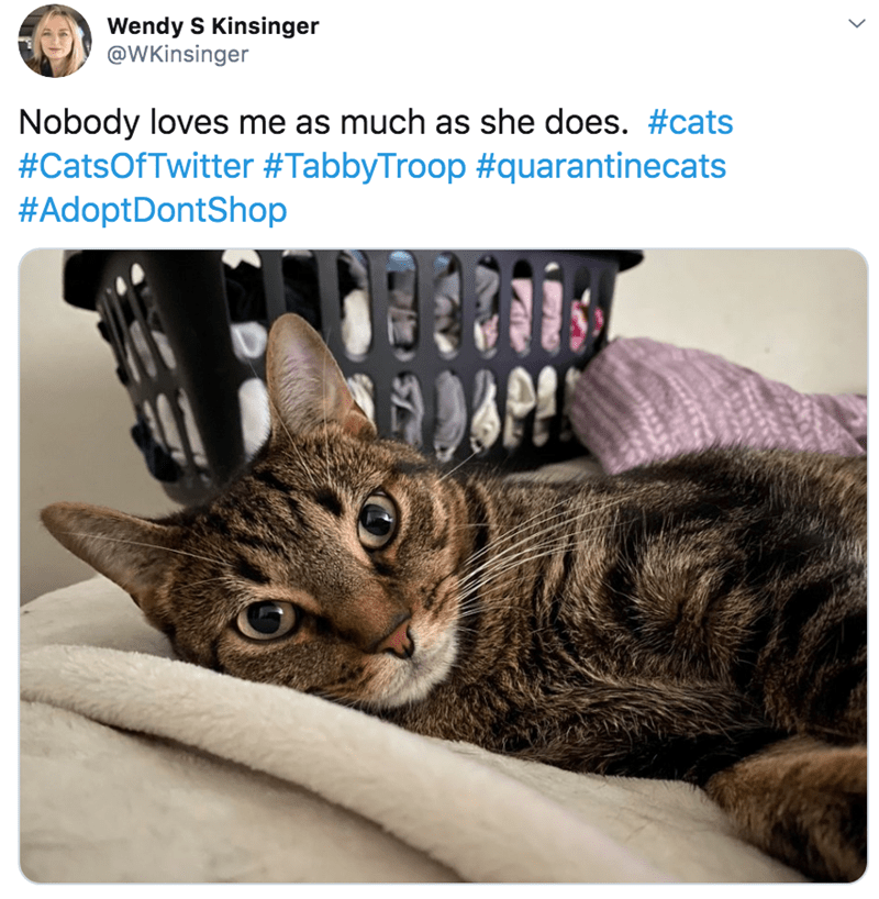 Cat - Wendy S Kinsinger @WKinsinger Nobody loves me as much as she does. #cats #CatsOfTwitter #TabbyTroop #quarantinecats #AdoptDontShop >