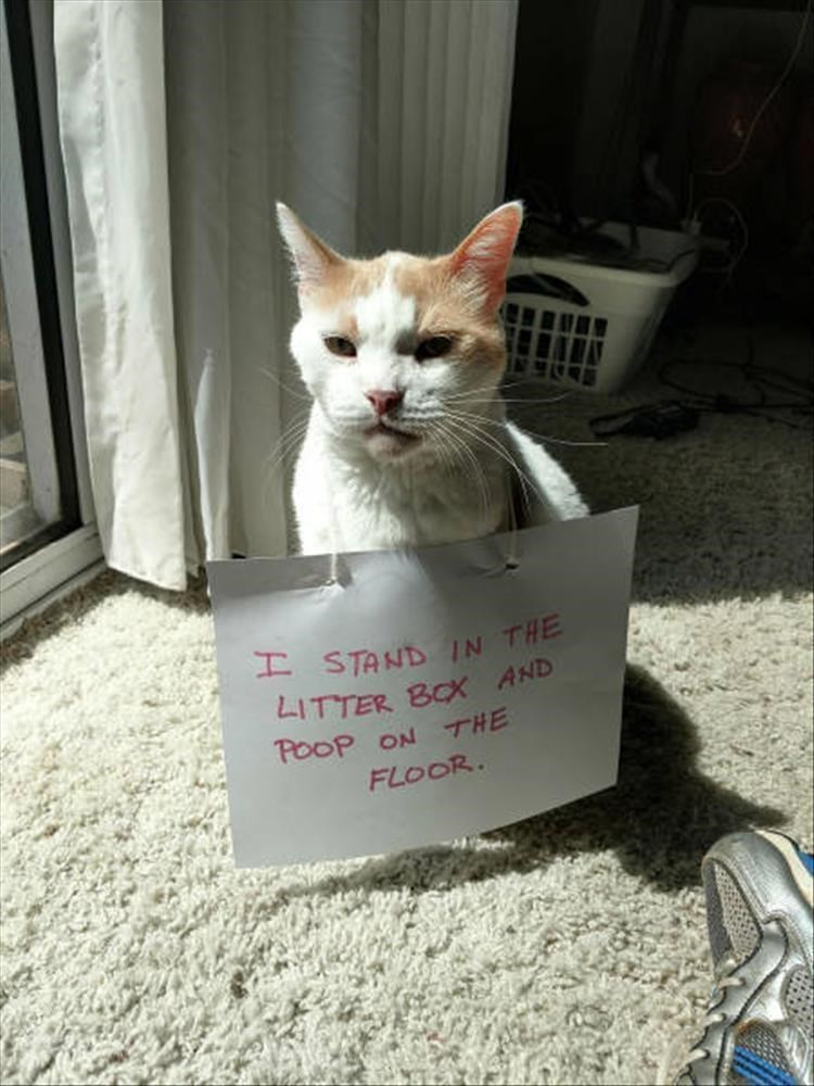 I STAND IN THE LITTER BOX AND POOP ON THE FLOOR cat wearing a sign around its neck