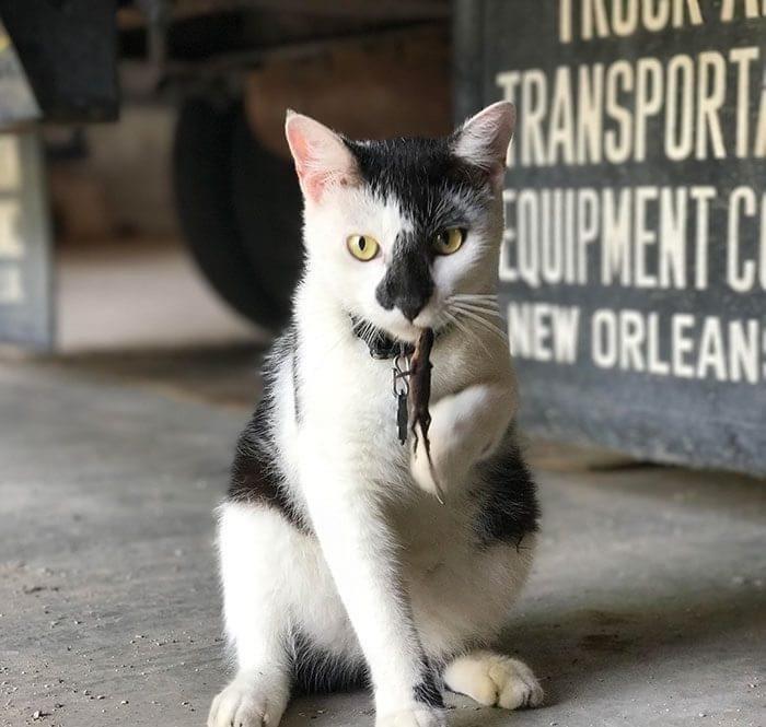 Cat - TRANSPORT EQUIPMENT NEW ORLEAN:
