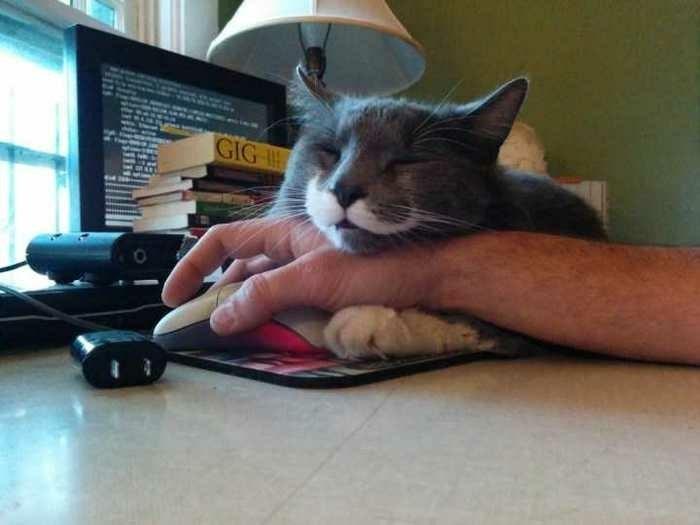 Cat - GIG-