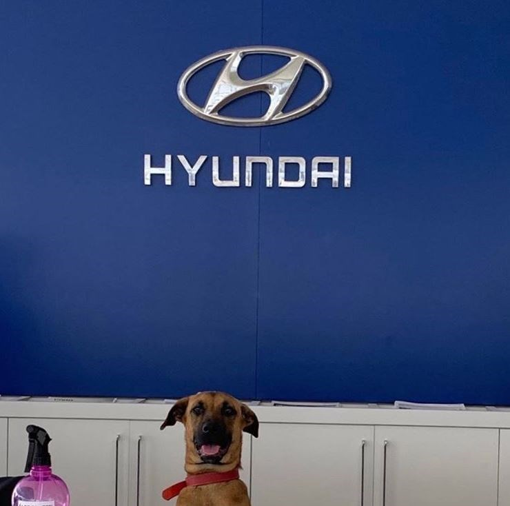 Dog - HYUNDAI