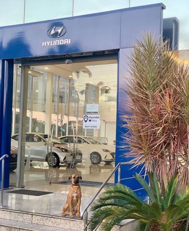 Building - HYUNDAI Hyundai Pets Bem-vindos
