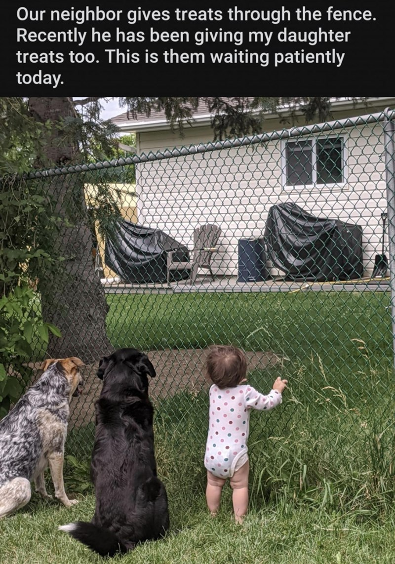 Net - Our neighbor gives treats through the fence. Recently he has been giving my daughter treats too. This is them waiting patiently today.