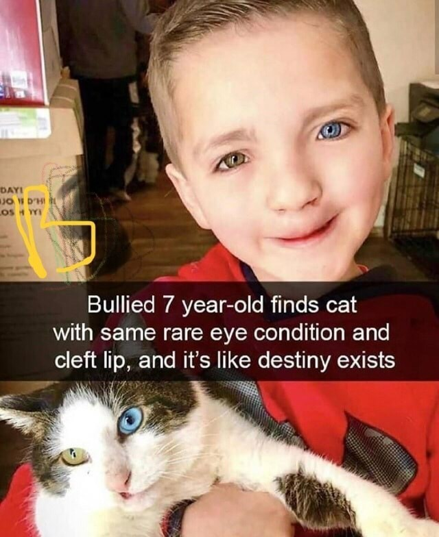Cat - DAYI JO W D'HI L LOS H YY Bullied 7 year-old finds cat with same rare eye condition and cleft lip, and it's like destiny exists