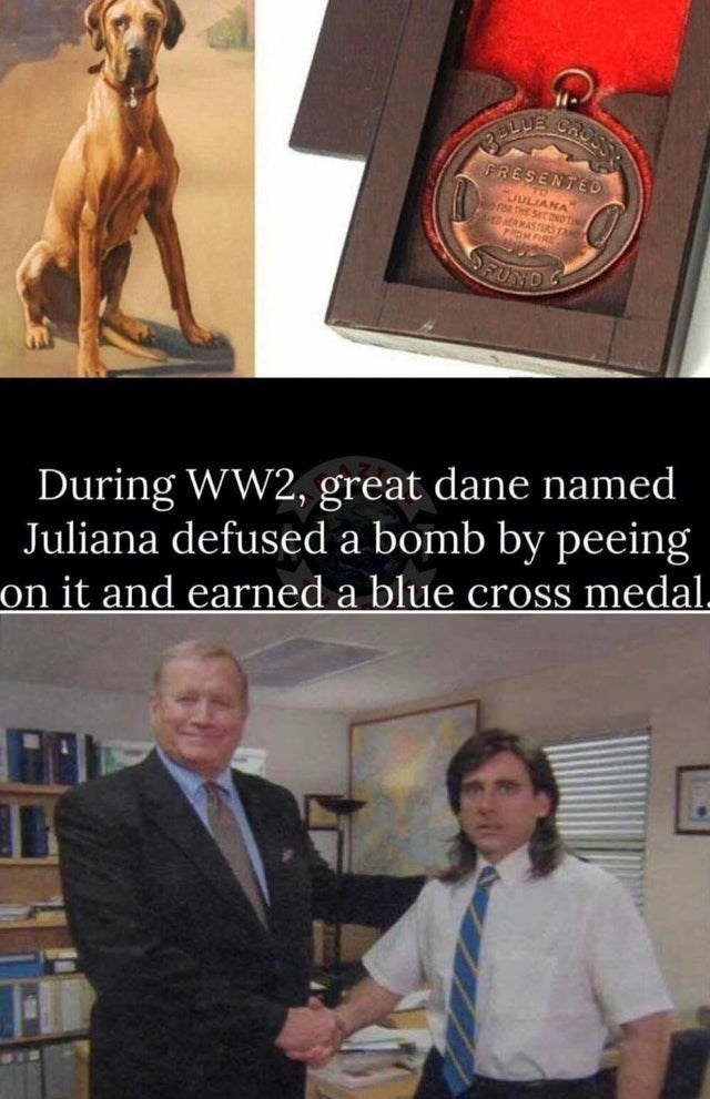 Human - PRESENTED JULIANA GDER MASTRS TA PROMFIRE FUND During WW2, great dane named Juliana defused a bomb by peeing on it and earned a blue cross medal.