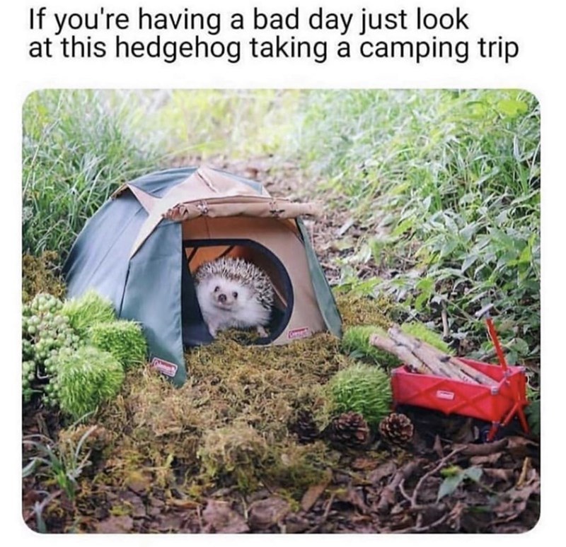 Plant community - If you're having a bad day just look at this hedgehog taking a camping trip