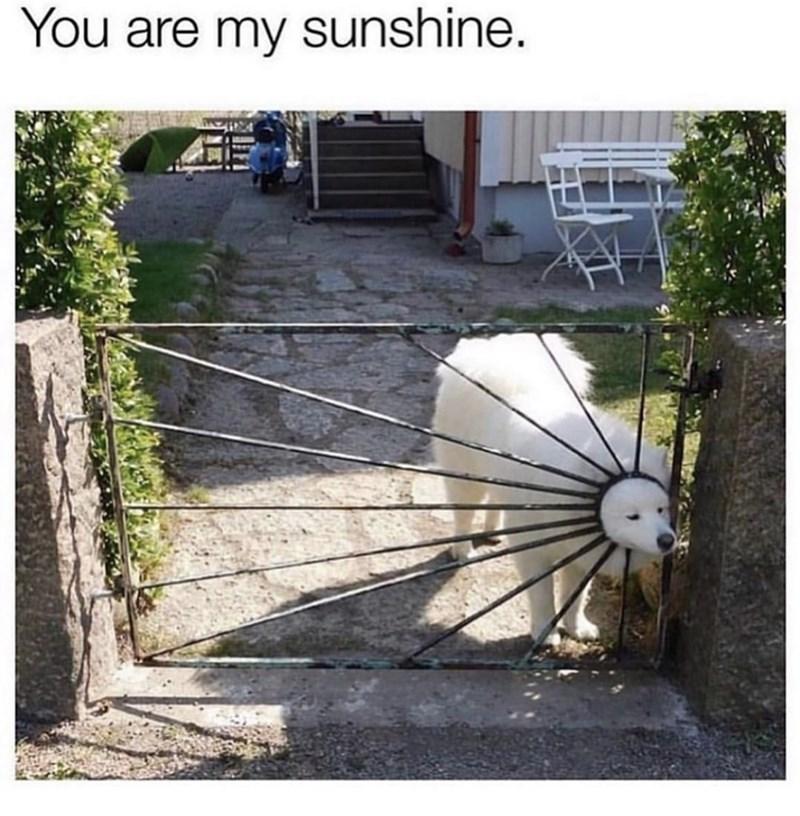 Yard - You are my sunshine.