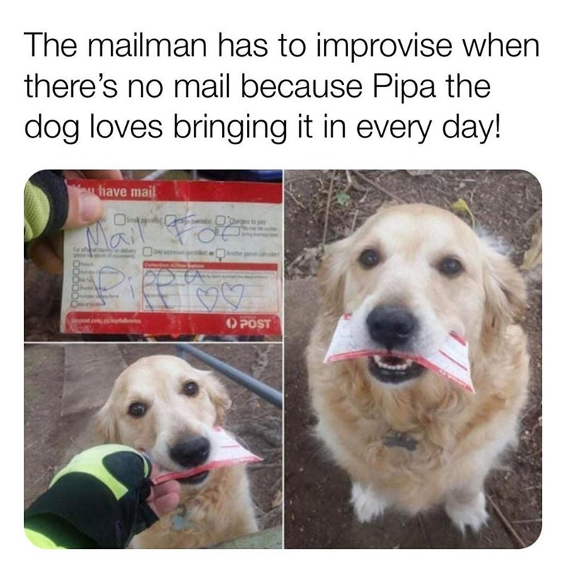 Vertebrate - The mailman has to improvise when there's no mail because Pipa the dog loves bringing it in every day! have mail Mail Fo O POST