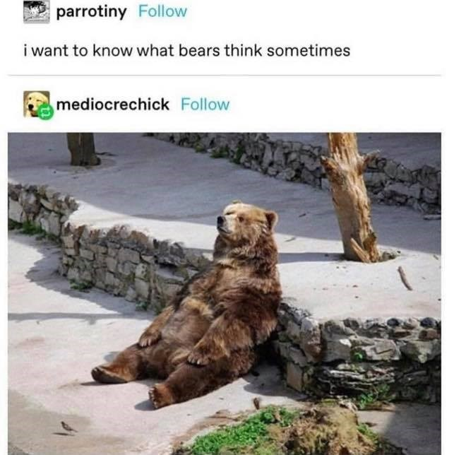 Brown bear - parrotiny Follow i want to know what bears think sometimes mediocrechick Follow