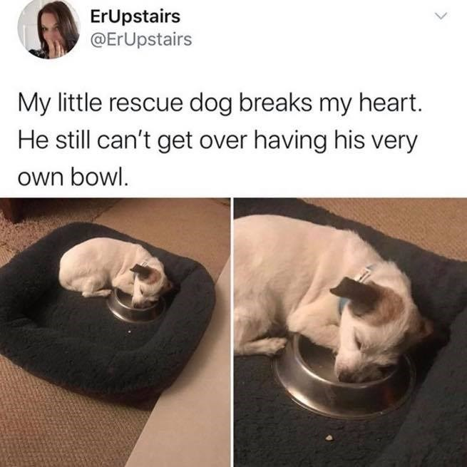 Dog - Canidae - ErUpstairs @ErUpstairs My little rescue dog breaks my heart. He still can't get over having his very own bowl.