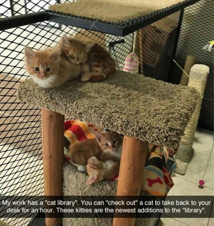 """My work has a """"cat library"""". You can """"check out"""" a cat to take back to your desk for an hour. These kitties are the newest additions to the """"library"""""""