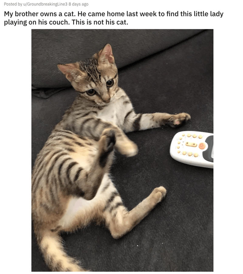 Cat - Posted by u/GroundbreakingLine3 8 days ago My brother owns a cat. He came home last week to find this little lady playing on his couch. This is not his cat.