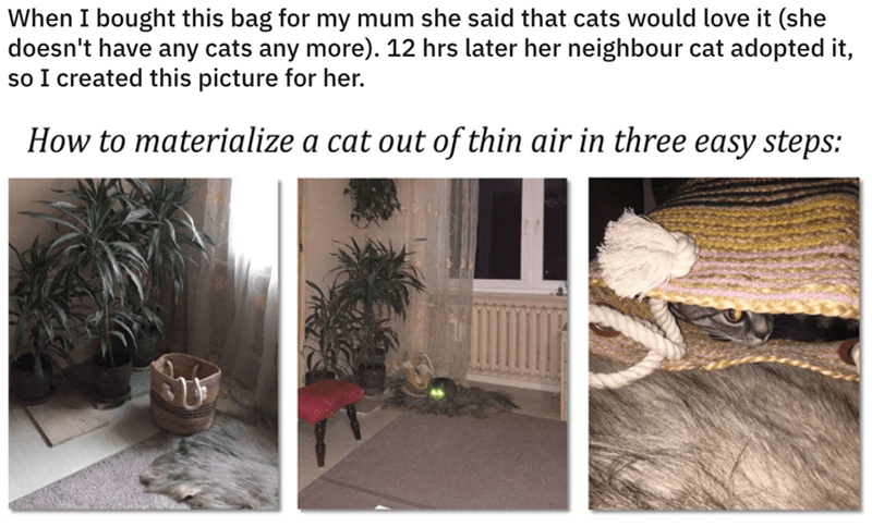 Room - When I bought this bag for my mum she said that cats would love it (she doesn't have any cats any more). 12 hrs later her neighbour cat adopted it, so I created this picture for her. How to materialize a cat out of thin air in three easy steps: