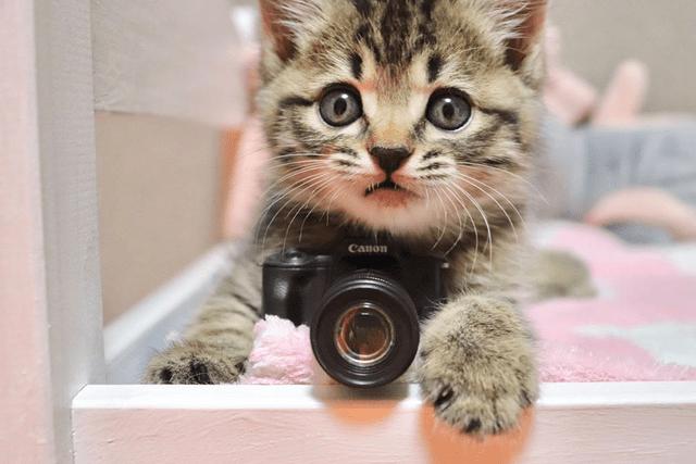 Cat - Canon
