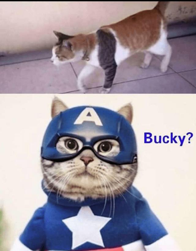Cat - Bucky?