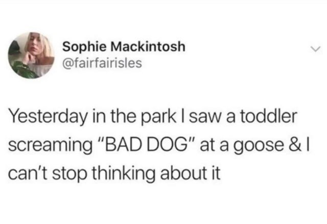 """Text - Sophie Mackintosh @fairfairisles Yesterday in the park I saw a toddler screaming """"BAD DOG"""" at a goose & I can't stop thinking about it"""