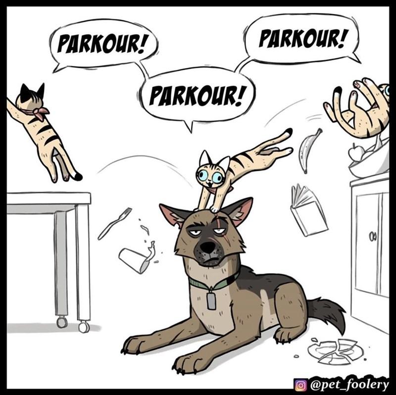 Cartoon - PARKOUR! PARKOUR! PARKOUR! @pet_foolery