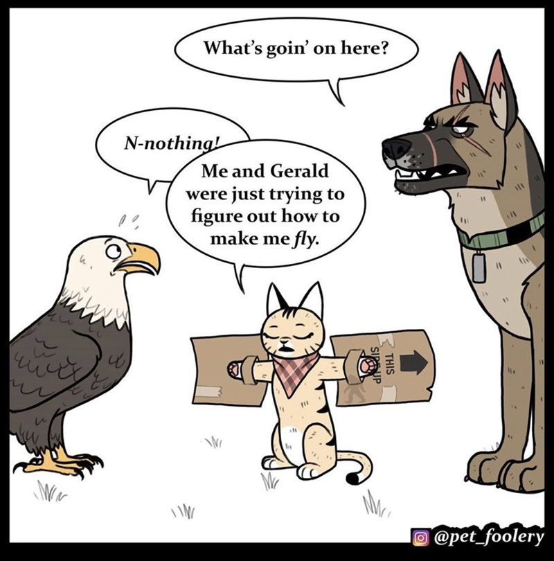 Cartoon - What's goin' on here? N-nothing! Me and Gerald were just trying to figure out how to make me fly. %3D %3D O @pet_foolery R THIS