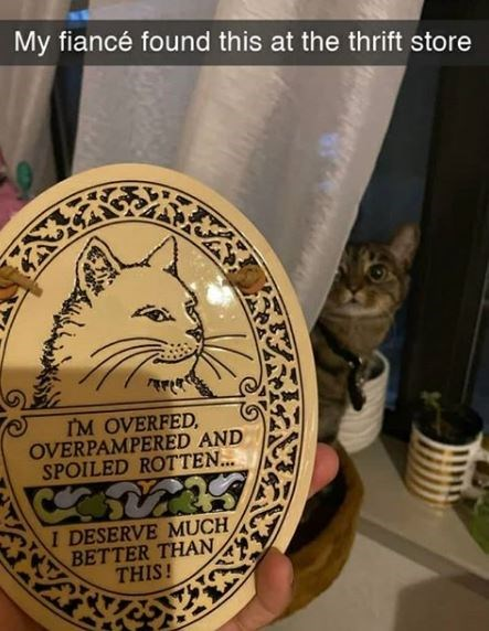 Cat - My fiancé found this at the thrift store I'M OVERFED, OVERPAMPERED AND SPOILED ROTTEN... I DESERVE MUCH BETTER THAN THIS!