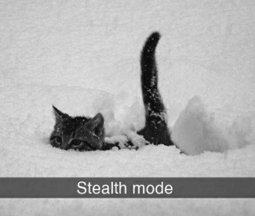 Cat - Stealth mode