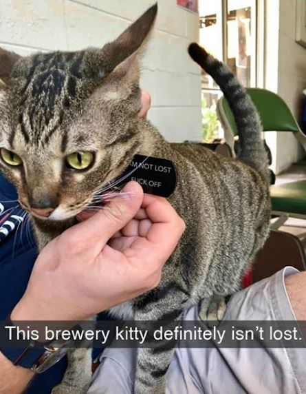 Cat - MKOT LOST CK OFF This brewery kitty definitely isn't lost.