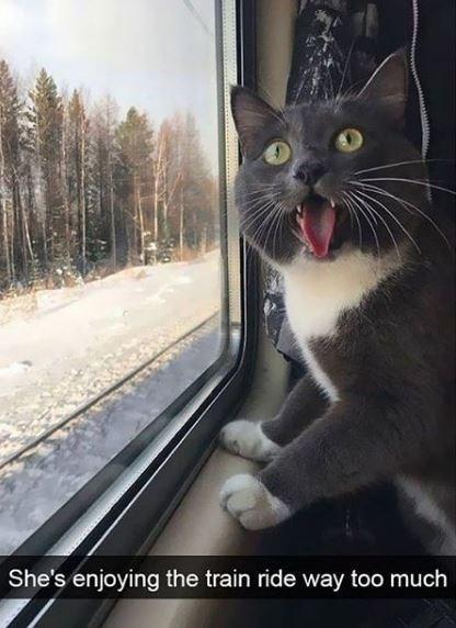 Cat - She's enjoying the train ride way too much