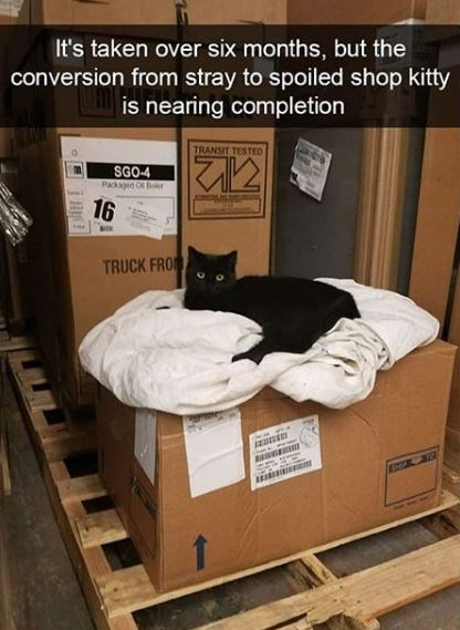 Furniture - It's taken over six months, but the conversion from stray to spoiled shop kitty is nearing completion TRANSIT TESTED SGO-4 Packaed Of B 16 TRUCK FRO ES0E 0