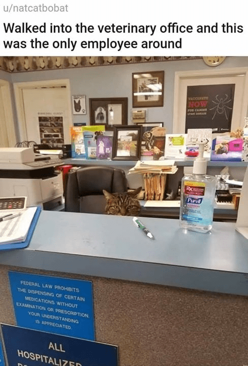 Property - Walked into the veterinary office and this was the only employee around u/natcatbobat VACCOETE NOW FOR CANINT Purel FEDERAL LAW PROHIBITS THE DISPENSNG OF CERTAIN MEDICATIONS WITHOUT EXAMINATION OR PRESCRITION YOUR UNDERSTANDING 3 APPRECIATED ALL HOSPITALI7FD