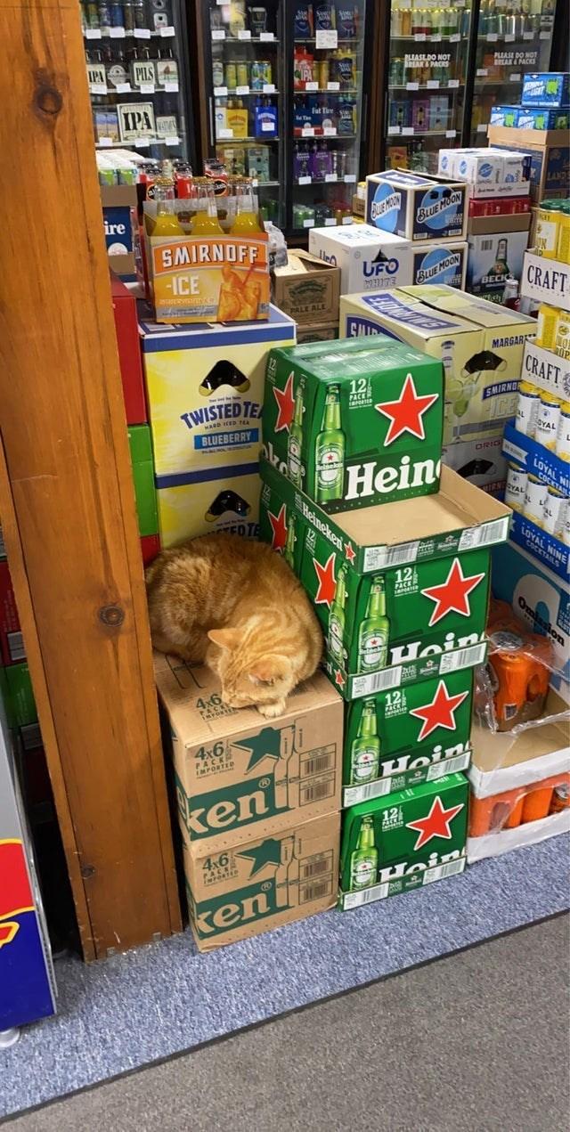 Retail - IPA PILS BLUASEDO NOT IHAK& PACS PLASE DO NOr EAK PACKS IPA LANDS QUE MOON SUE MOON ire SMIRNOFF -ICE UFO BLUE MOON CRAFT BECKS PALE ALE MARGARK CRAFT 12 SMIRNO TWISTED TE ALYAL BLUEBERRY ORIG Hein LOYAL NY COCKTA TRN SYAL Heineken EDTE AL NINE 12 Hein M 之國 12 ion 4x6 rORTED Hoin keni E 12 4x6 Hoin ken CE