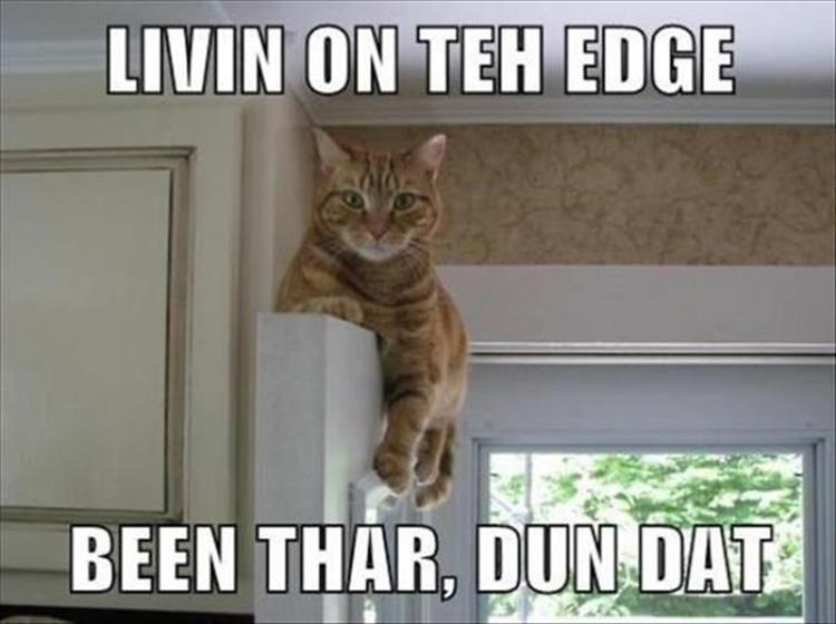 livin on the edge been there done that cat sitting on top of a door