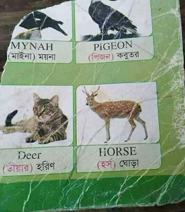 Organism - MYNAH (মাইনা) ময়না PIGEON (পিজন) কবুতর Deer HORSE (তীয়ার) হরিণ (হর্স) ঘােড়া