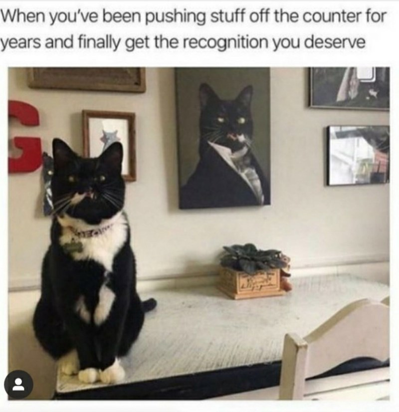 Cat - When you've been pushing stuff off the counter for years and finally get the recognition you deserve