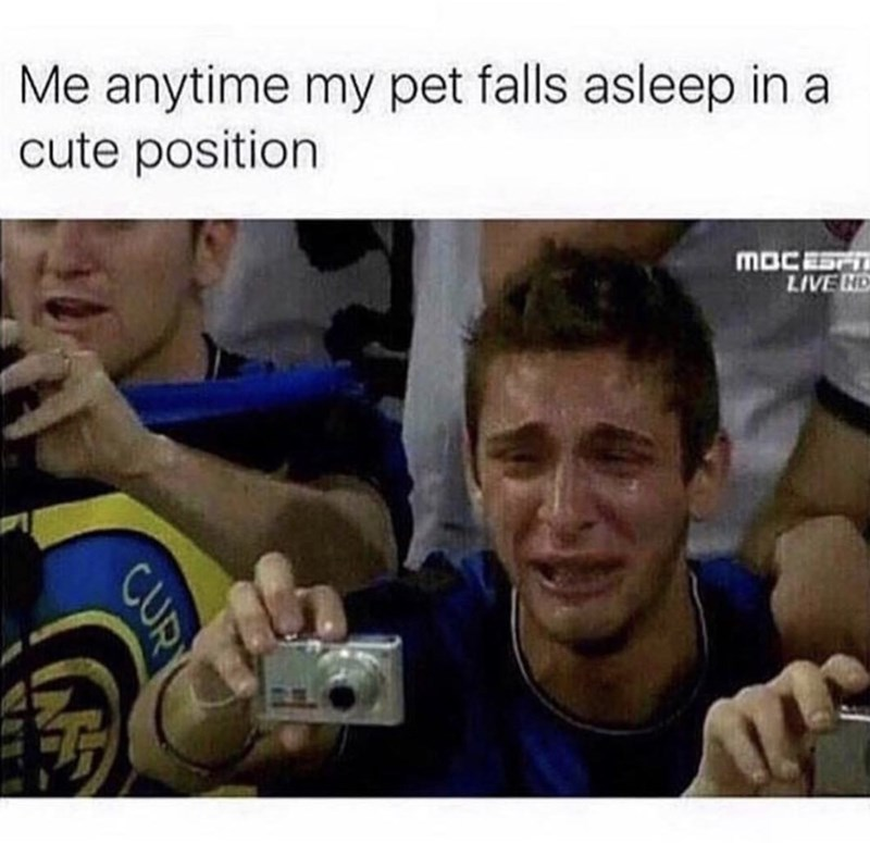 Product - Me anytime my pet falls asleep in a cute position MOCESH LIVE ND CUR