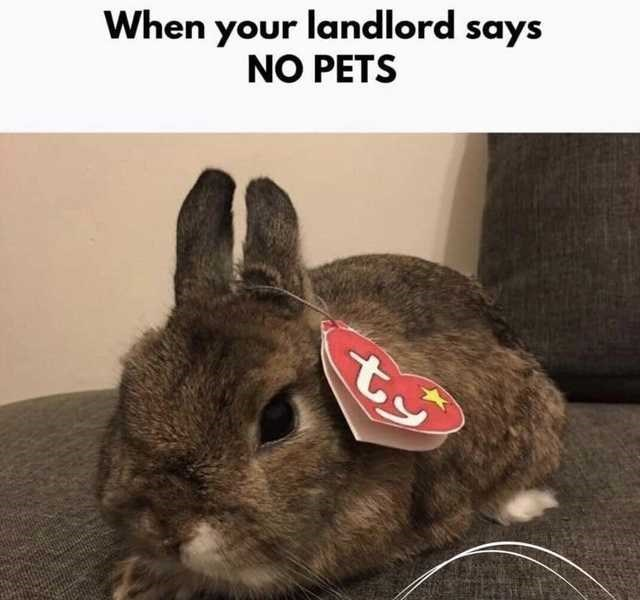 Rabbit - When your landlord says NO PETS ty