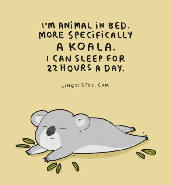 Text - I'M ANIMAL IN BED. MORE SPECIFICALLY A KOALA. I CAN SLEEP FOR 22 HOURS A DAY. LINGVI STOV. COM
