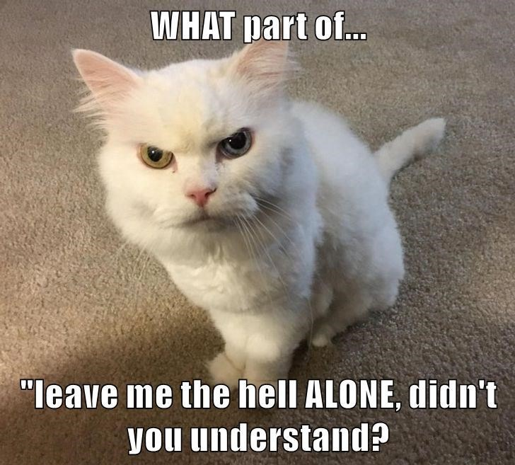"Cat - WHAT part of. ""leave me the hell ALONE, didn't you understand?"