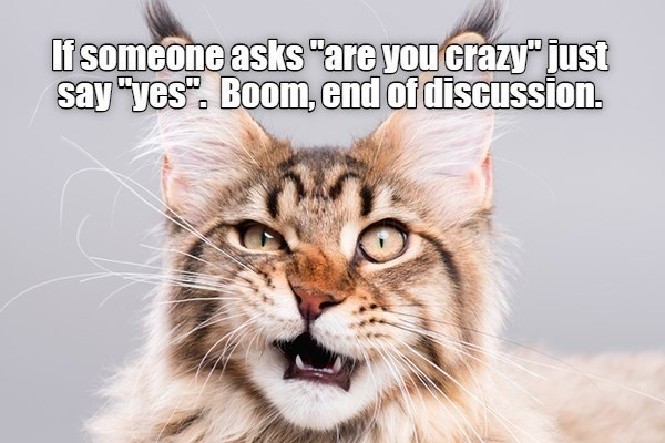 "Cat - If someone asks ""are you crazy just say ""yes"". Boom, end of discussion."
