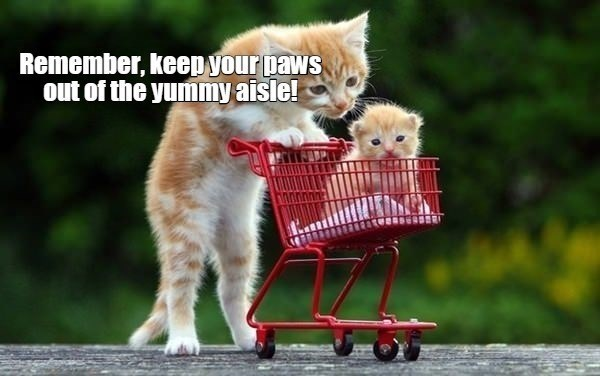 Cat - Remember, keep your paws out of the yummy aisle!