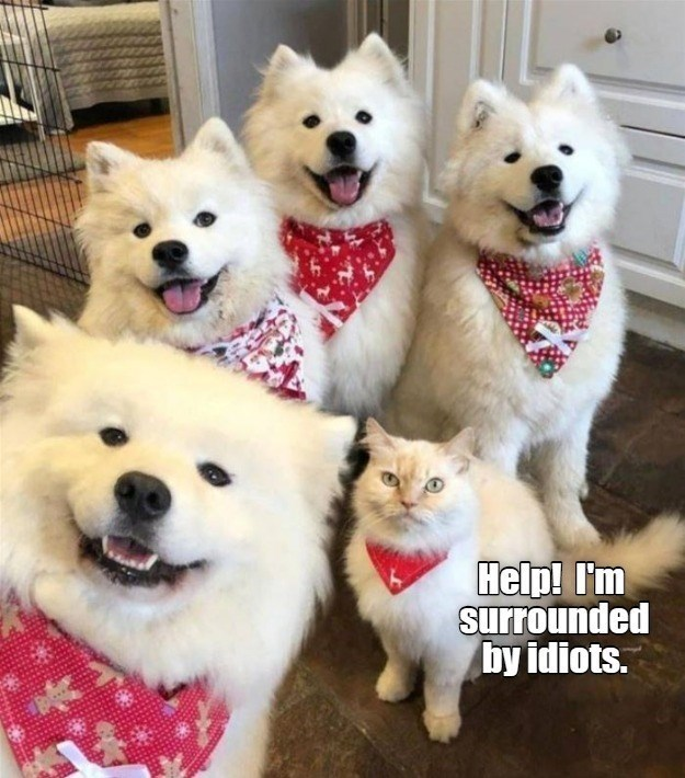 Dog - Help! I'm surrounded by idiots.
