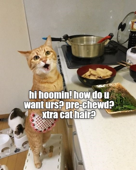 Cat - hi hoomin! how do u want urs? pre-chewd? xtra cat hair?