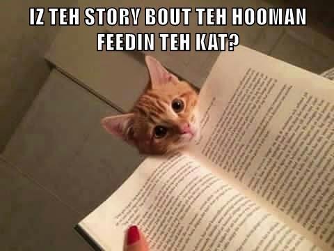 Cat - IZ TEH STORY BOUT TEH HOOMAN FEEDIN TEH KAT?