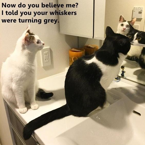 Cat - Now do you believe me? I told you your whiskers were turning grey.