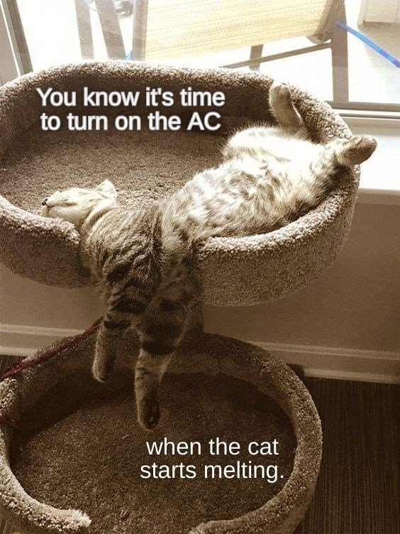 Cat - You know it's time to turn on the AC when the cat starts melting.