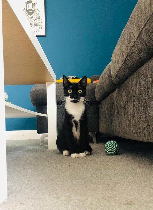 Cat - AWAY
