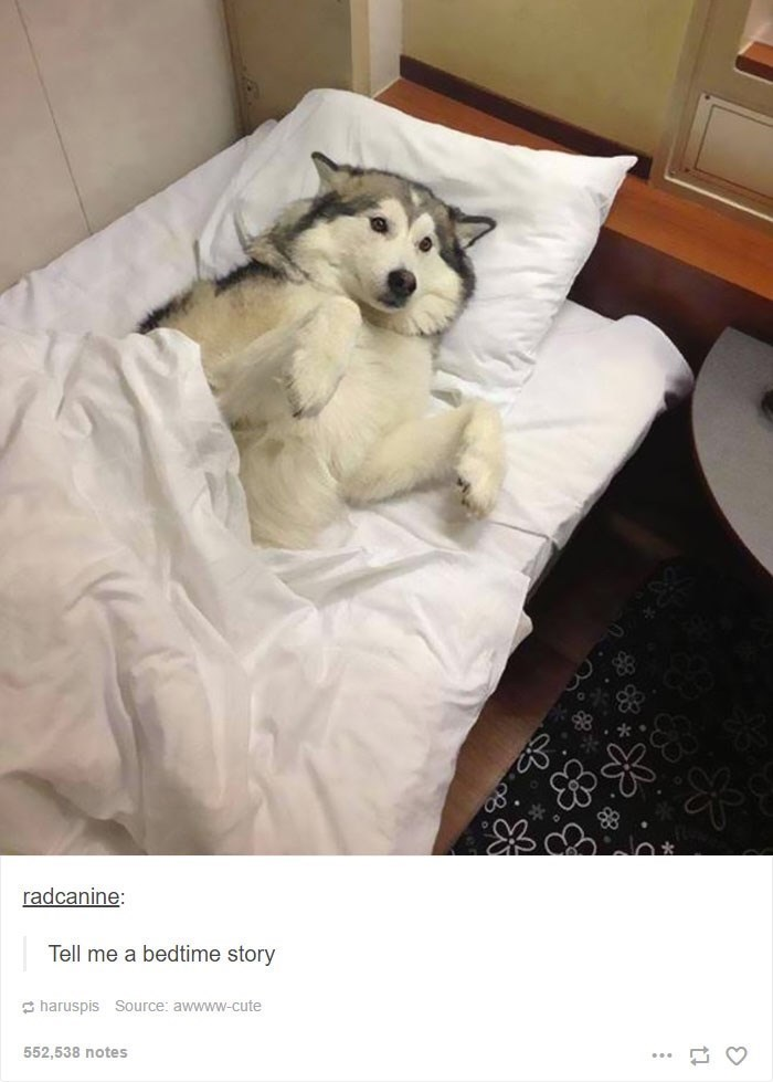 Dog - radcanine: Tell me a bedtime story E haruspis Source: awwww-cute 552,538 notes