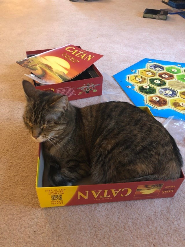 Cat - CATAN GE RLES ALMANIC M ANALAN CATAN AIR WITIN LTIO ANV ONIOYSH CATAN LEARN